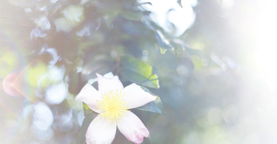 レスポンシブデザイン対応 WordPressテーマ「Flora deux」